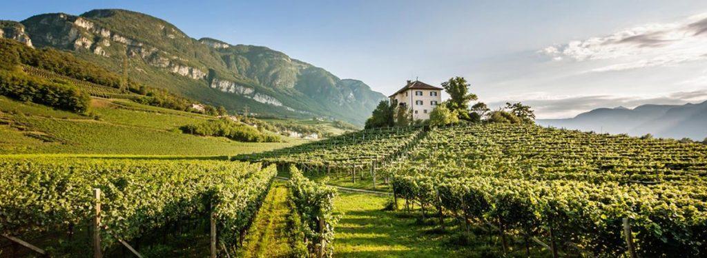 Panorama vigneti Alto Adige
