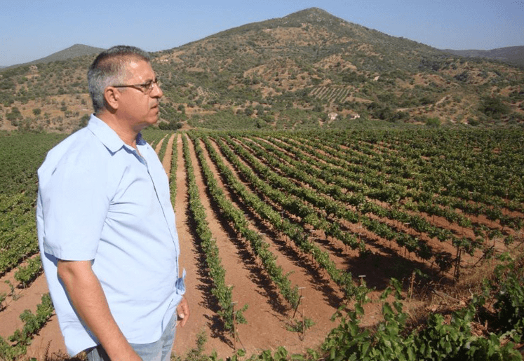 Monemvasia Winery - Tsibidis