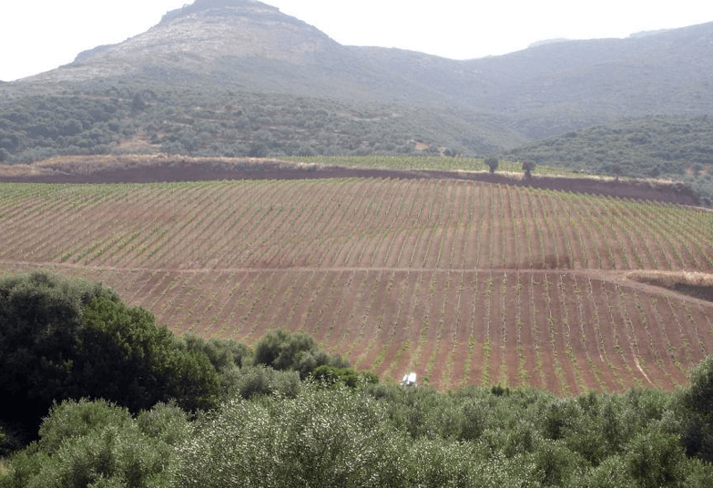 Monemvasia Winery - vineards